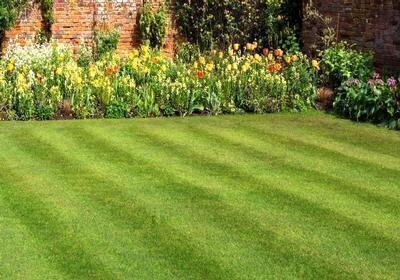 Selecting a Lawn Care Service image